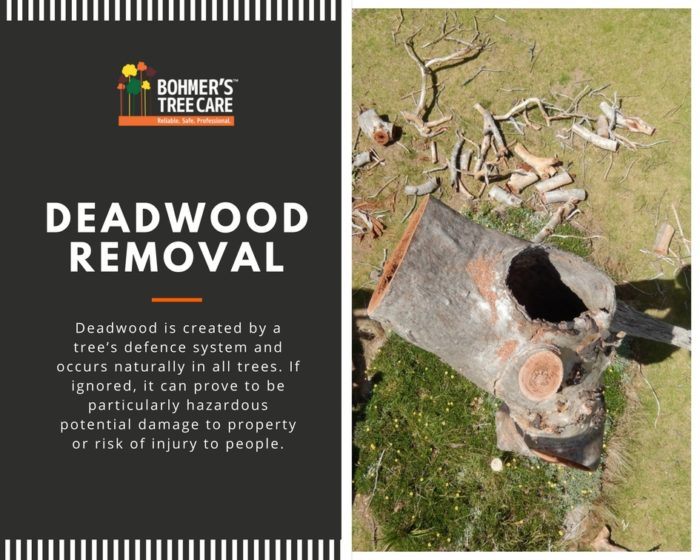 Dead Wood Removal Service